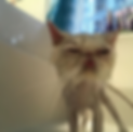 Screen Shot 2019-10-16 at 11.26.37 PM.pn