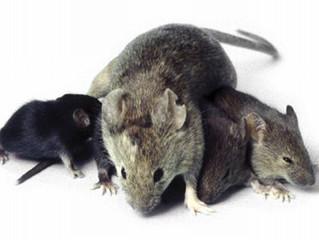 Pest Kontrol Nedir?