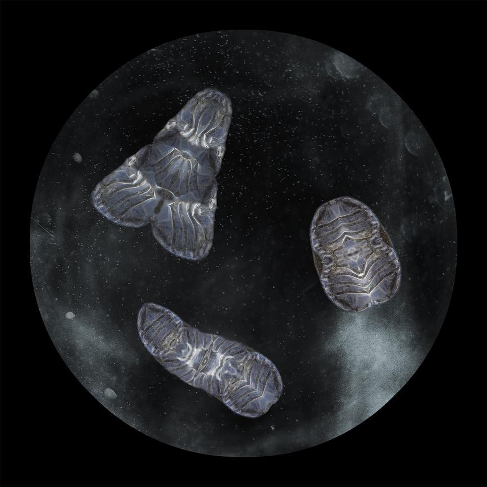 Plastic Plankton hybrid