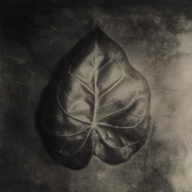 JoseSnook_Imposters_leaf.jpg