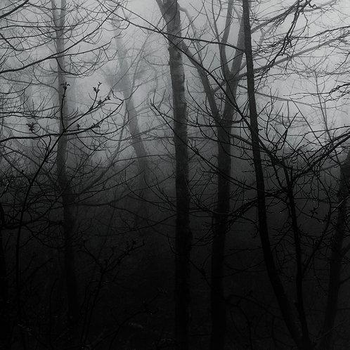 Shadow Land