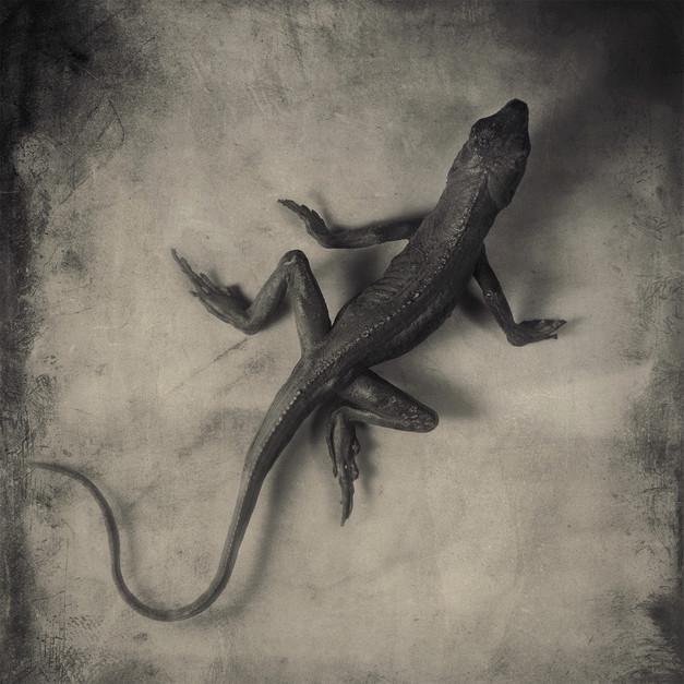 JoseSnook_Imposters_lizard.jpg