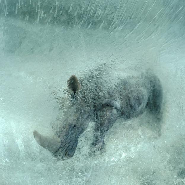 JoseSnook_Resurrection_white rhino.jpg