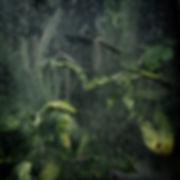 glass_darkly.jpg