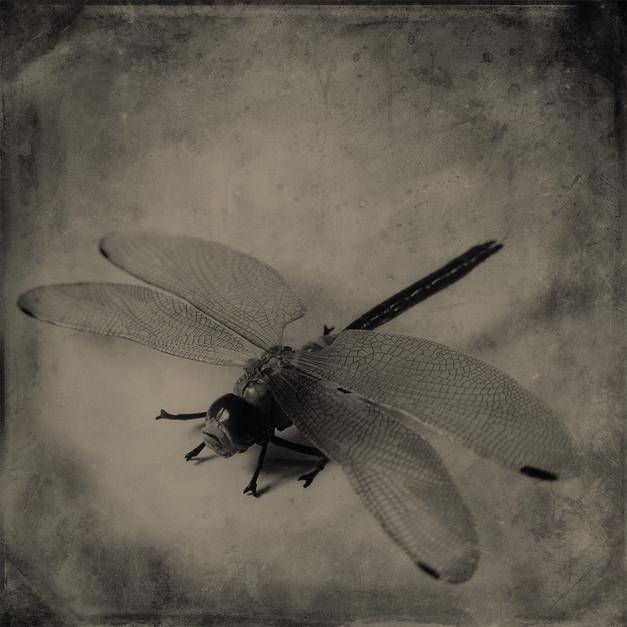 JoseSnook_Imposters_dragonfly.jpg