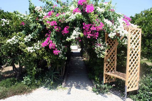 olive-farm-of-datca-guesthouse (3).jpg