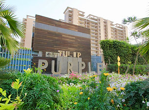 Tulip-Purplr | 4-bhk-apartments-in-sector-69 .jpeg