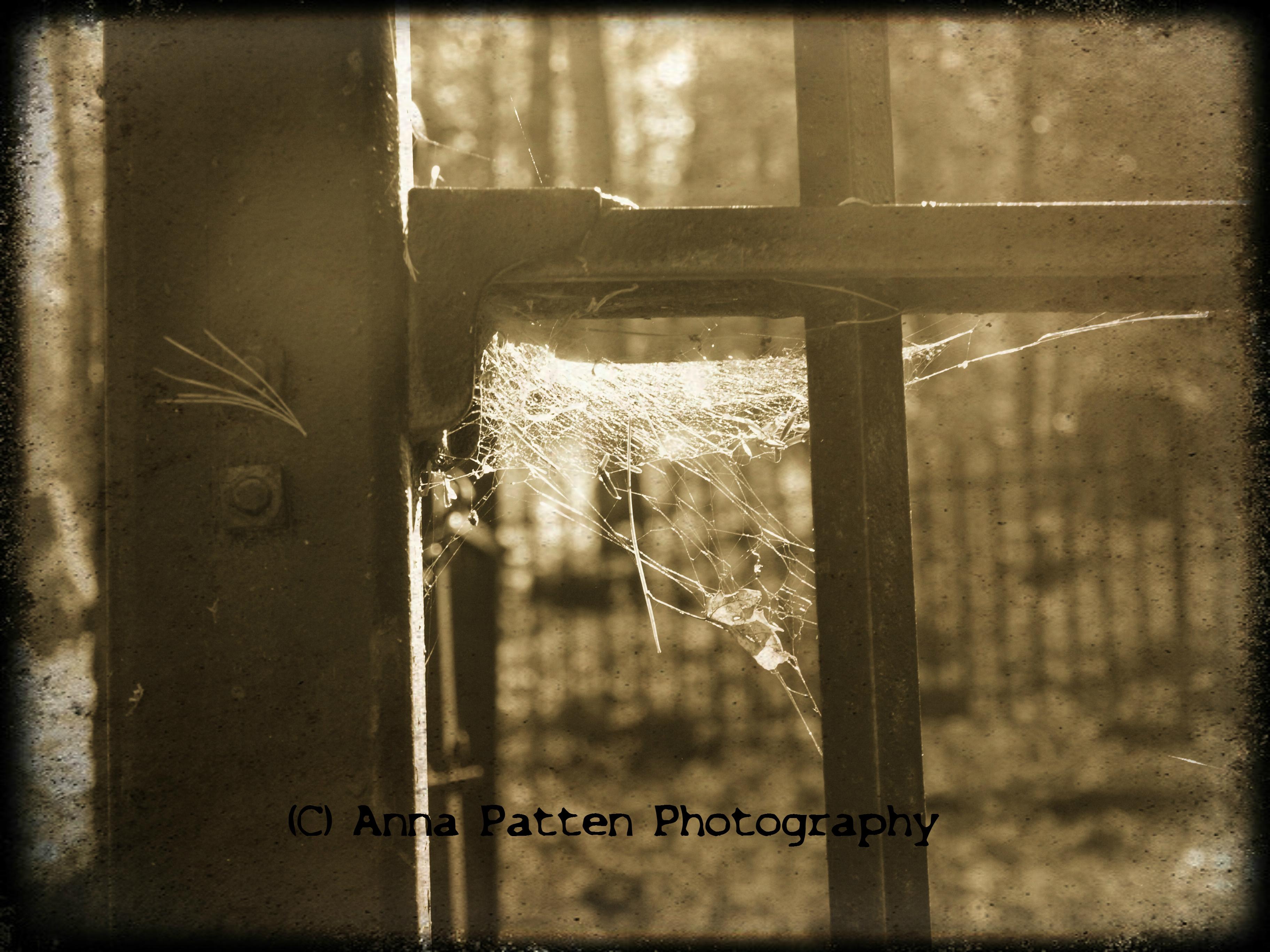 Spiders Corner