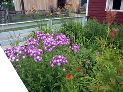 Cooperstown Flowers
