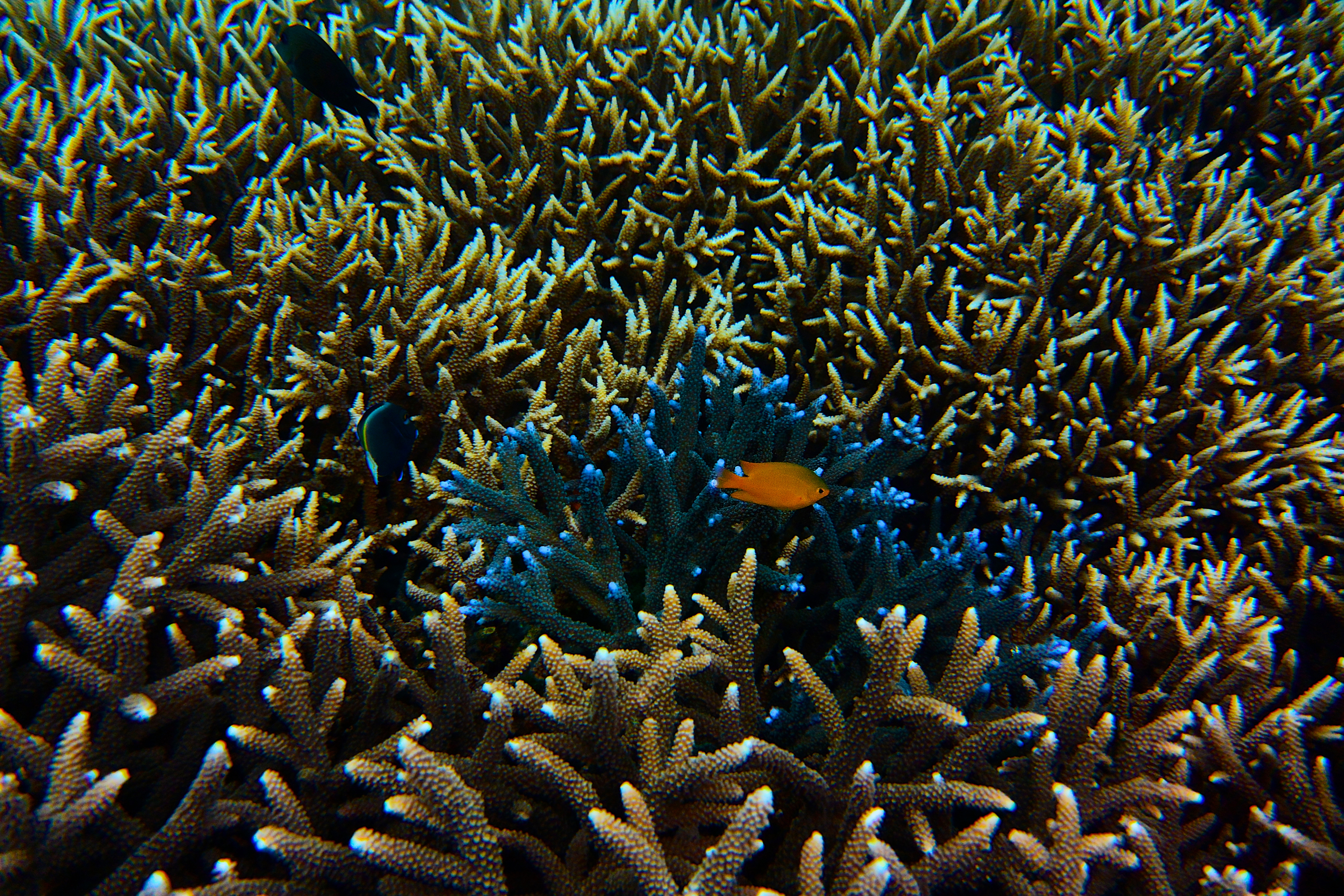 HIDING IN THE REEF