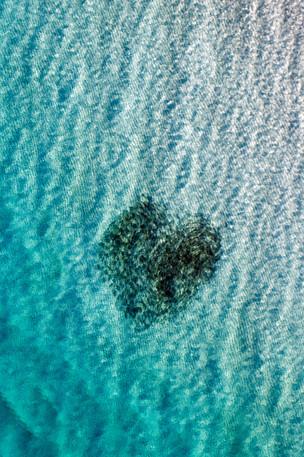 Heart of Fish