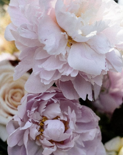 bridal peonies by State of Nature Florals Victoria
