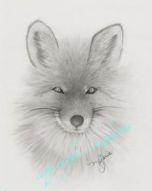 Sly Foxy Face