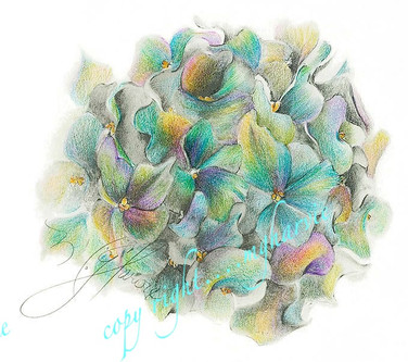heavenly hydrangea