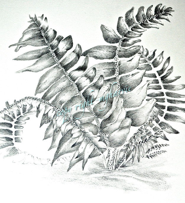 Woodland fern