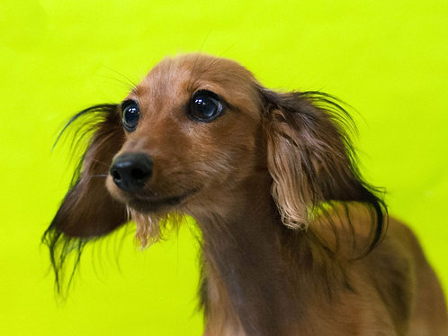 Puppy Package (4 Weekly Visits)