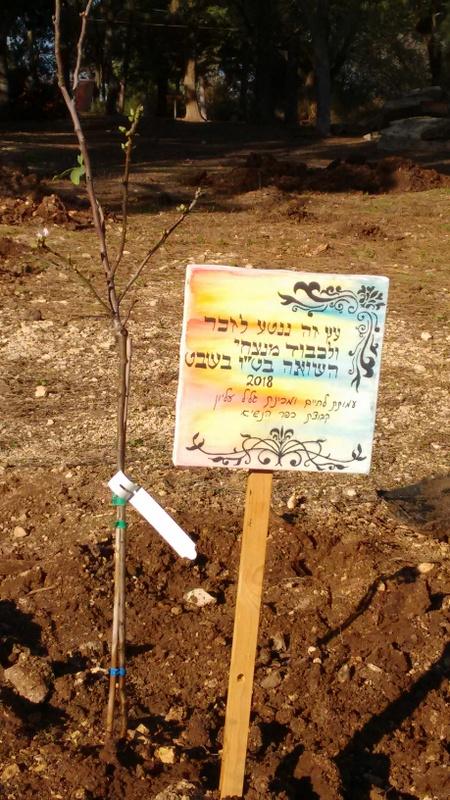 This tree is dedicated for the shoa winners on TuBeshvat 2018 by Lechaim and Mechina Kfar Hanasi
