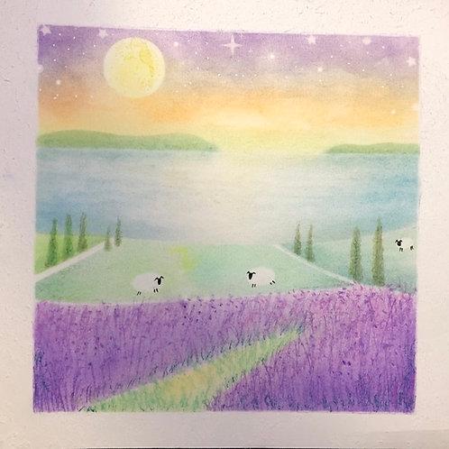 Lavender fields By Teacher Eva Chen