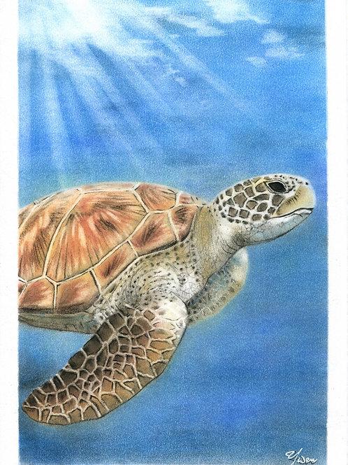 Sea turtle...By Teacher Kuo Yun Wen