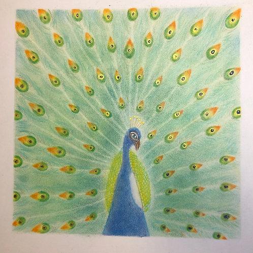 Peacock...By Teacher Eva Chen