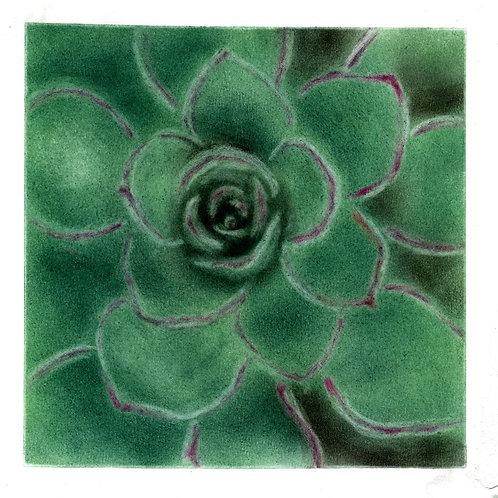 Evergreen...By Teacher Heather Seetoh