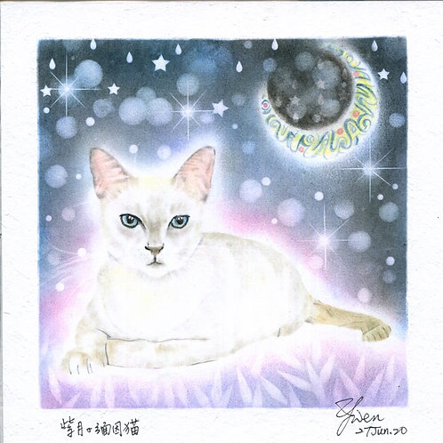 Burmese Cat By Teacher Kuo Yun Wen