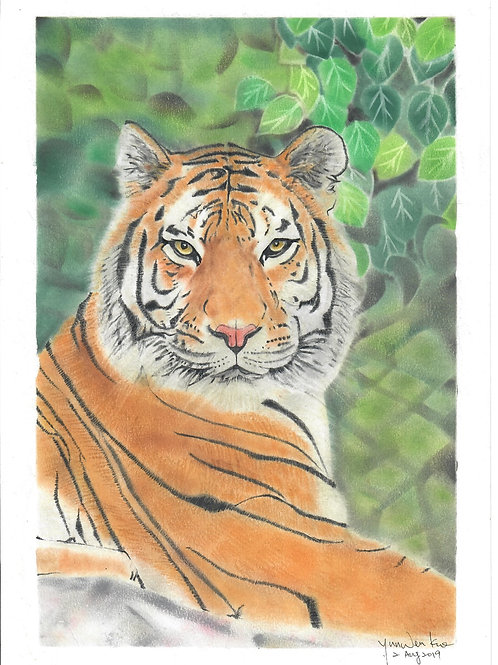 Tiger By Teacher Kuo Yun Wen