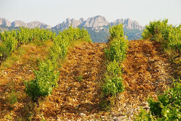 Mont Bayon 2.jpg