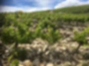 Mont Bayon .jpg