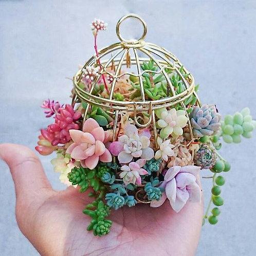 Lovely Handmade Succulents