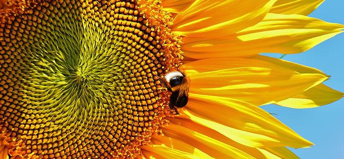 pexels-pixabay-162353.jpg