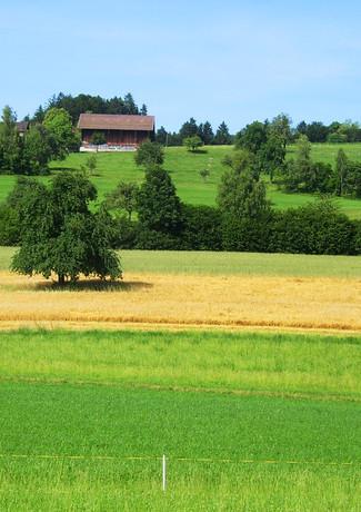 Panorama Feld 5.jpg