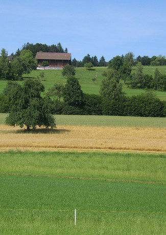 Panorama Feld 2.jpg