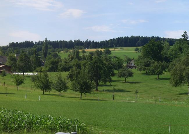 Panorama Feld 3.jpg