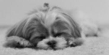 puppyphoto.jpg