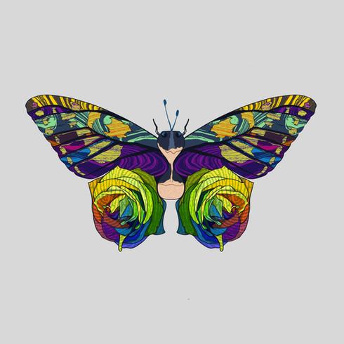 Textures and Butterflies
