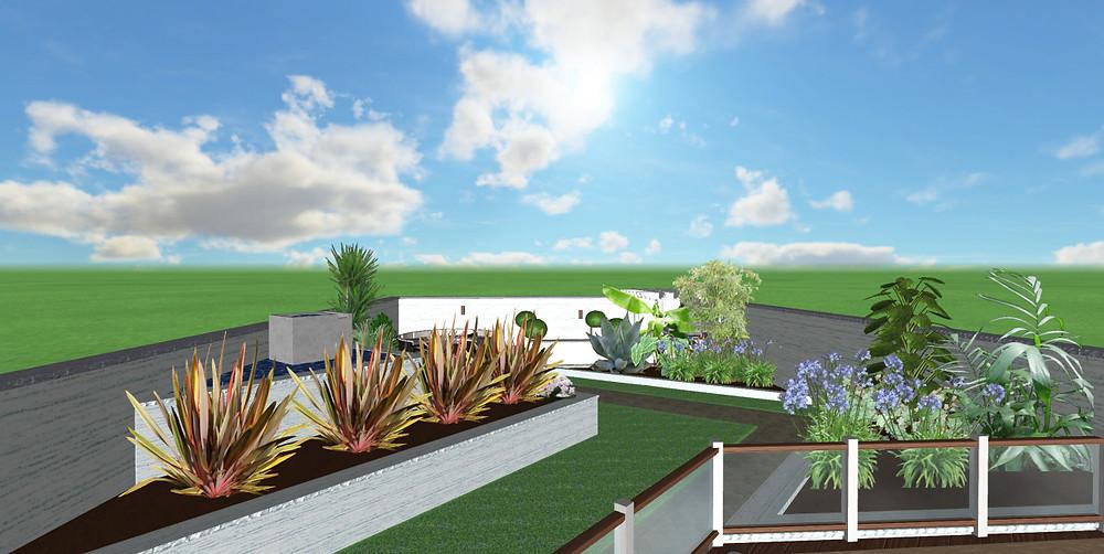 New Zealand flax used in garden design