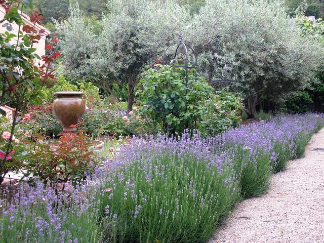 Lavender, Mediterranean Garden