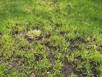 Fixing your lawn for summer