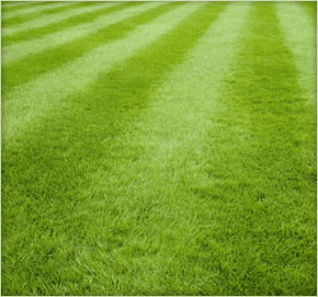 Good quality lawn