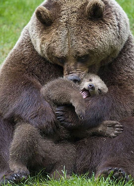 mamma and baby bear.jpg