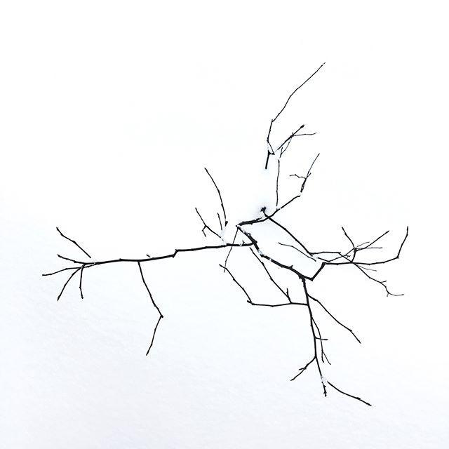 #crack #smalltree #fromthetop #snow #win