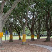 yellow ribbon - 11.2.19 -0734.jpg