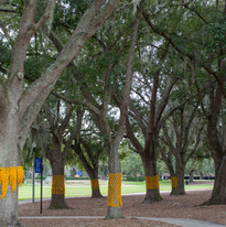 yellow ribbon - 11.2.19 -0735.jpg