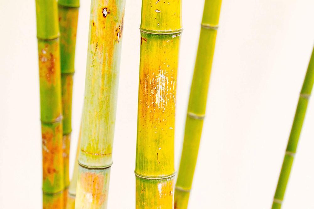 מוצרי טקסטיל לבית מצמח הבמבוק
