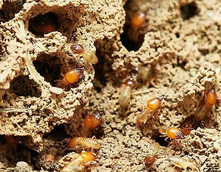 termites-3367350_640.jpg