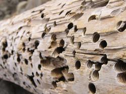 termite-holes