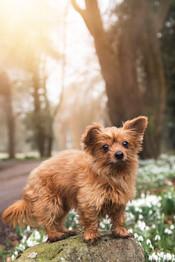Pet Portrait Photography-5.jpg