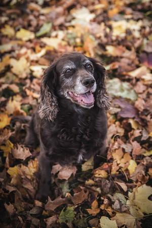 Pet Portrait Photography-2.jpg