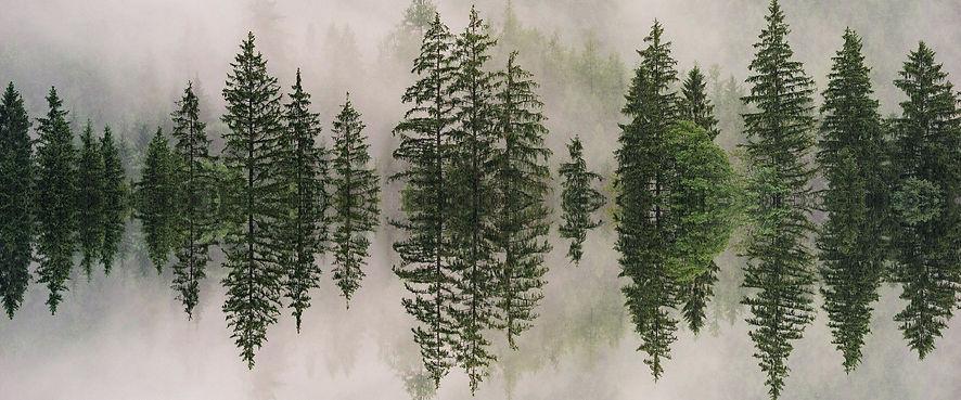 Baum-Tonspur-1.jpg